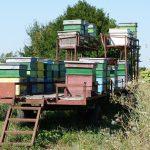 Пчели и ремаркета