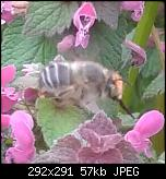Щракнете върху изображението за по-голям размер  Име:IMG_20200322_105757.jpg Прегледи:      85 Размер:57.3 KB ID:10335