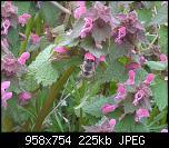 Щракнете върху изображението за по-голям размер  Име:IMG_20200322_105758.jpg Прегледи:      87 Размер:224.8 KB ID:10336