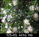 Щракнете върху изображението за по-голям размер  Име:Снимка от 2019-09-20 21-06-53.png Прегледи:      80 Размер:446.8 KB ID:10210