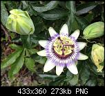 Щракнете върху изображението за по-голям размер  Име:Снимка от 2019-09-20 21-08-04.png Прегледи:      80 Размер:272.9 KB ID:10211