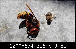 Щракнете върху изображението за по-голям размер  Име:20221643fL8hrdwX[1].jpg Прегледи:      80 Размер:356.2 KB ID:10051