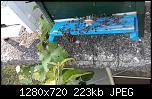 Щракнете върху изображението за по-голям размер  Име:viber_image_2021-06-17_22-42-25.jpg Прегледи:      59 Размер:222.9 KB ID:10751