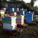 Продавам 20  пчелни семейства в кошери, система ДБ